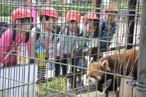 年少 市川動植物園 えんそく