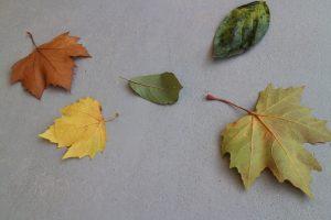 落ち葉あそび