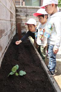 年中 野菜の苗と種まき
